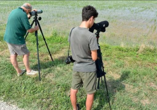 Nelle risaie biologiche di Tornaco avvistati uccelli migratori fuori stagione