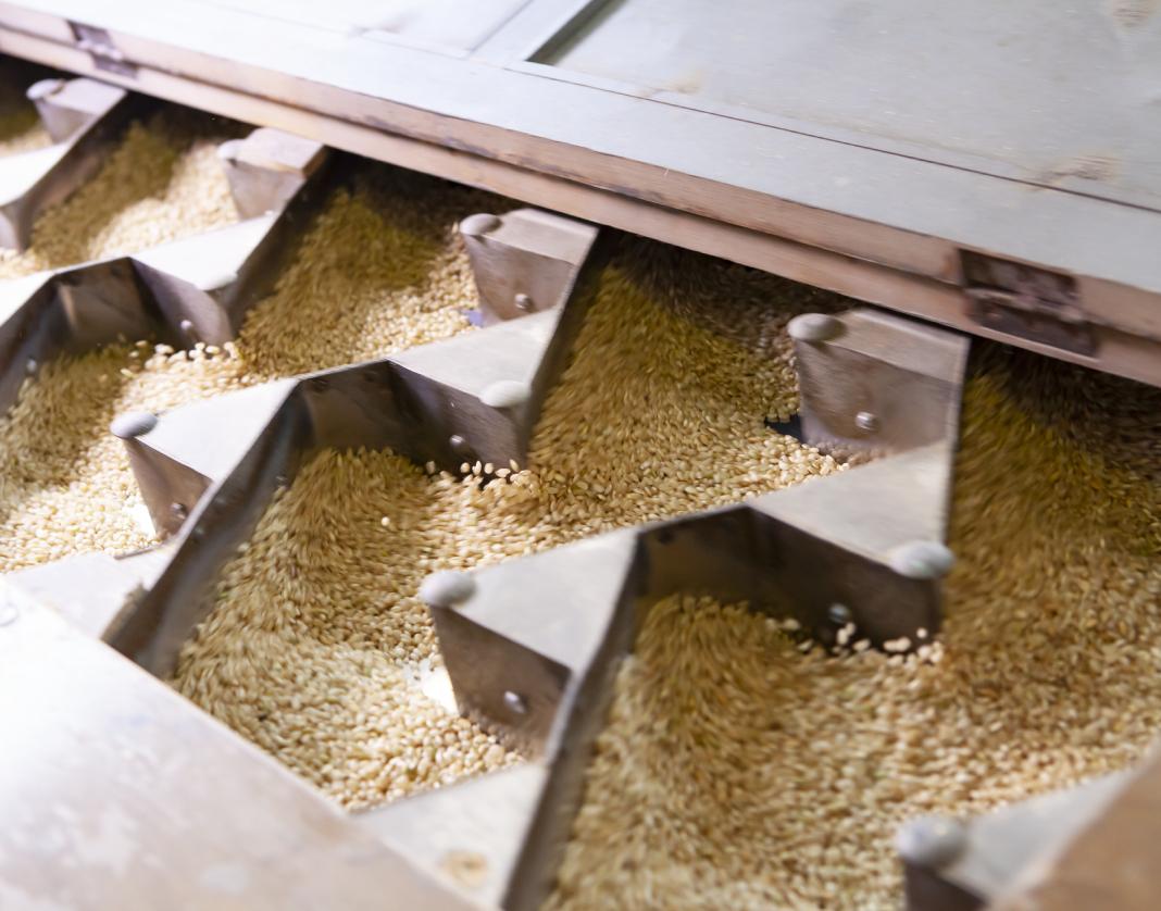 Cassetto in legno contenente dispositivi di acciaio usati nella lavorazione del riso a Mede.