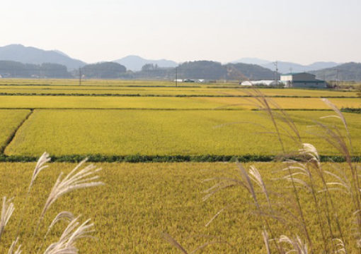 Second Organic Rice farming and Production Systems International Conference
